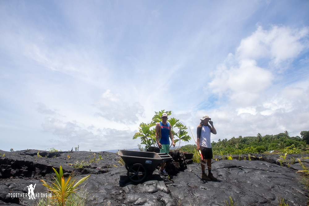 Young men with wheel barrow of mulch working as a volunteer for Center for Getting Things Started at the New Black Sand Beach at Big Island, Hawaii