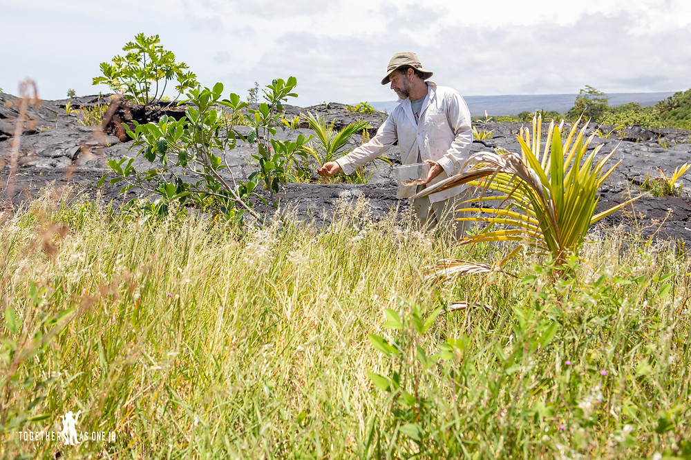 Scott Laaback planting seeds from the Center for Getting Things Started at the New Black Beach in Big Island Hawaii