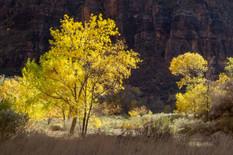Zion National Park, near Big Bend.jpg