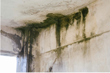 When Can You Sue For Mold?