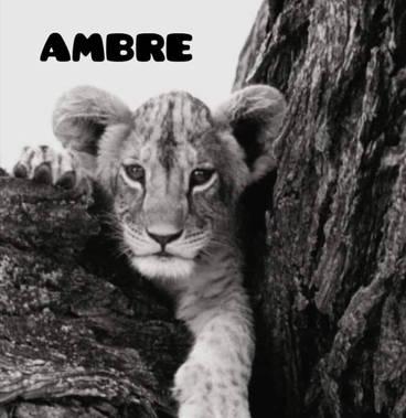 Nous soutenons AMBRE