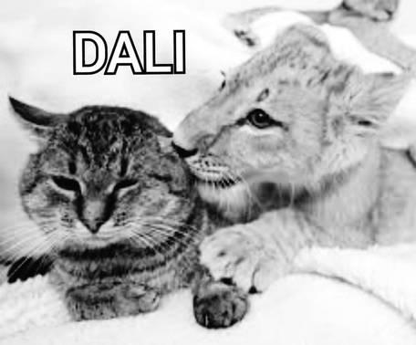 Nous soutenons Dali ❤🦁