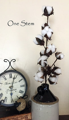 Two Cotton Stems - 12 Heads per Stem