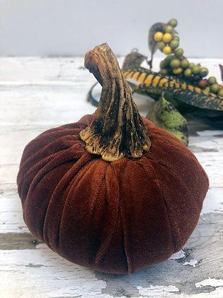 Small  Pumpkin Stems