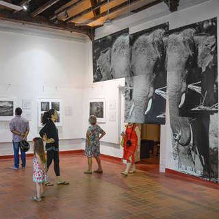 Solo Exhibit - David Hall Gallery, Fort Kochi, India