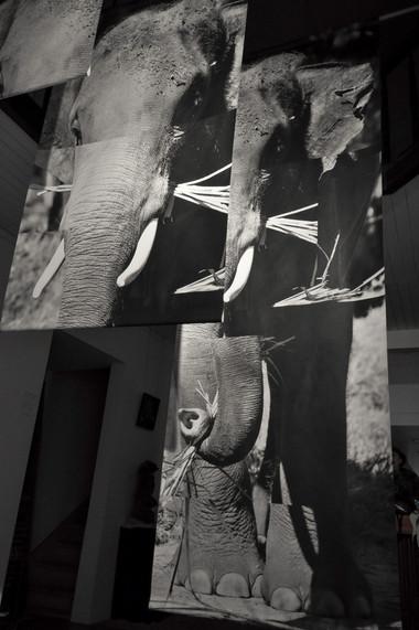 Life-Size Elephant Panels