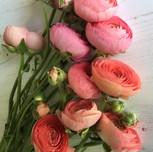 Flower Party Ranunculus