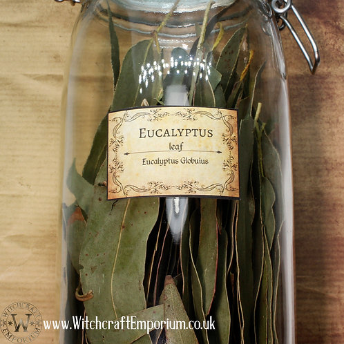 Eucalyptus (Leaves)