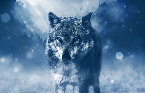 Wolf Fridge Magnet