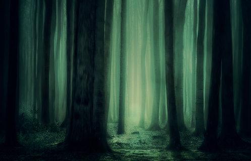 Dark Forest Fridge Magnet