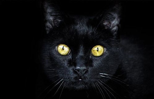 Black Cat Fridge Magnet