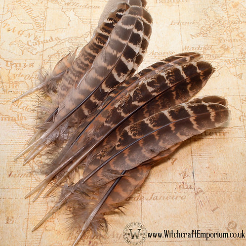 Spotted Owl Feathers
