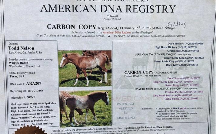 Carbon Copy - papers .jpg