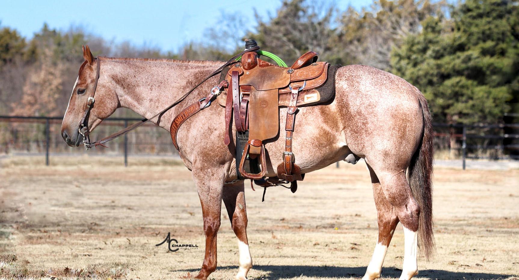 cowboy - off mane .JPG