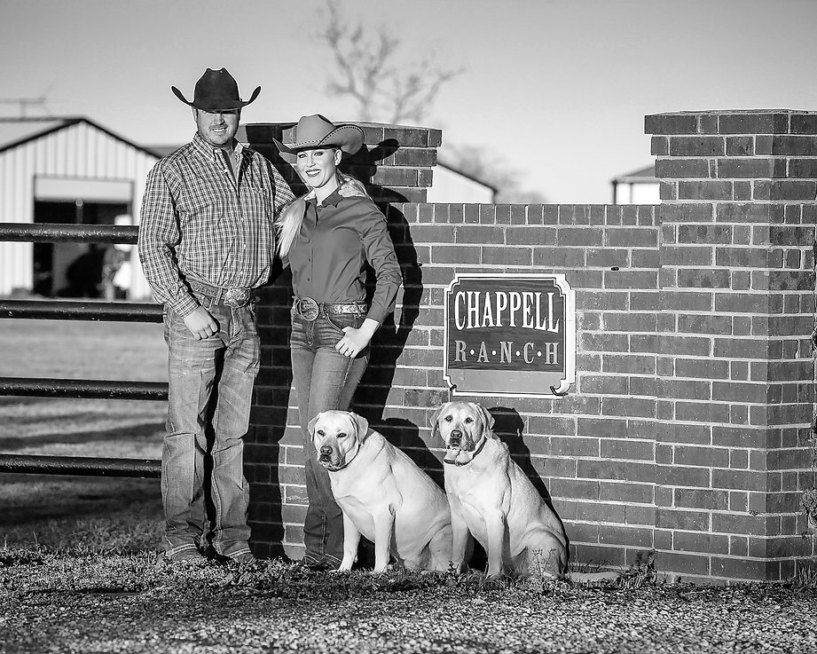 Chappell Horse Sales