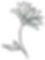 wdp-logo-icon-lg-web.png