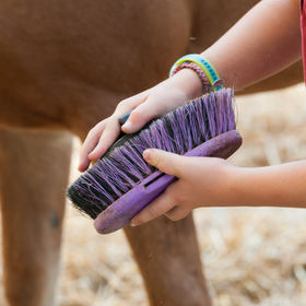 Children grooming horse with a brush.jpg