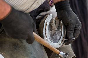 farrier man shoeing a horse.jpg