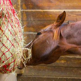Horse Eating Hay.jpg