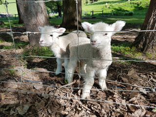 Lambs Little river