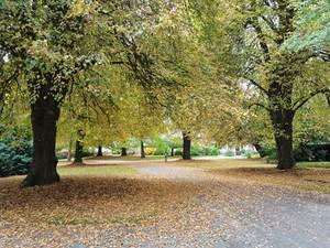 Hagley park Christchurch.jpg