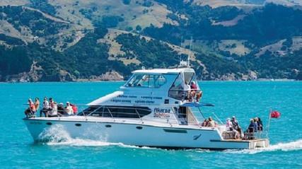 Akaroa Hector Dolphin nature cruise