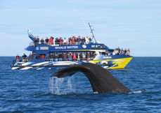 Whale Watch Kaikoura.JPG