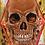 Thumbnail: Sacred Geometry Skull 8x10
