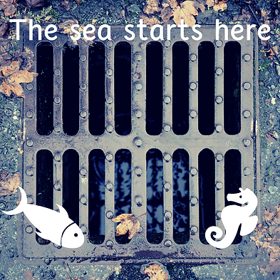 The sea starts here.png