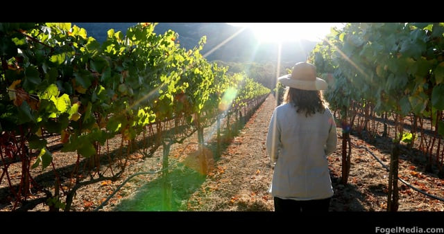Biodynamic Wine, California