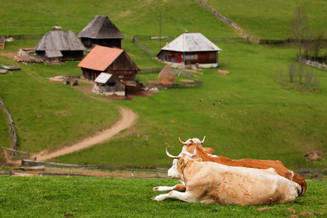 Master Experience (Transylvania)