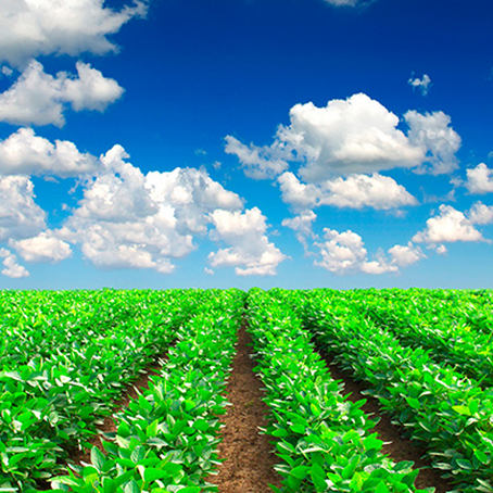 4 Steps to Get Started with Precision Ag