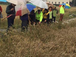 救濟爭取|協助大雅區小麥農爭取農損救助