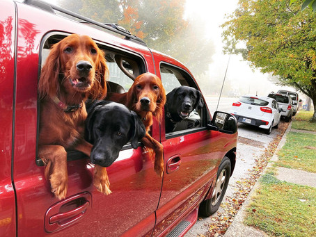 The dog days of summer are over and fall is here!