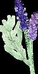 lavender_watercolor_frame_circle2.png