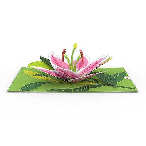Love Pop - Lily Bloom Card
