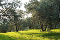 Villa rental by owner in Tuscany