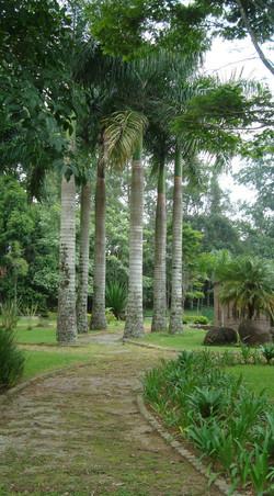 Bosque e trilha