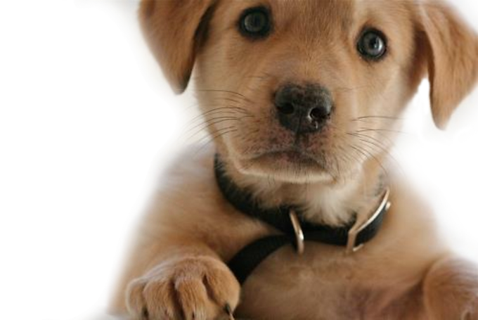 Copy of puppy_transparent-background.png
