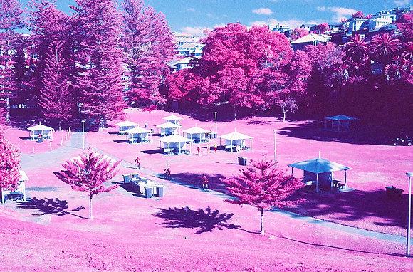 Bronte Park, Pink