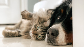 Are Essential Oils Safe For Pets?