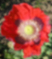 DSCF0088_edited.jpg