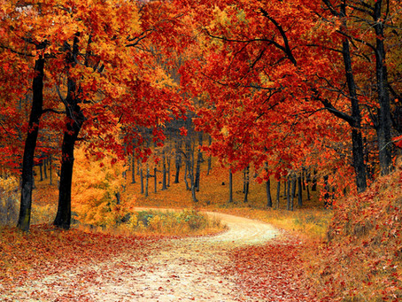 Fall Colors - Why do Leaves Change Color?