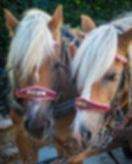 horse-3736769_1280.jpg