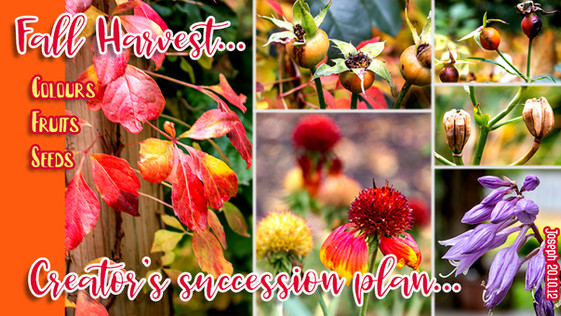 201012 Creator's Succession Plan.jpg