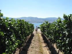 wine-country_9011068678_o