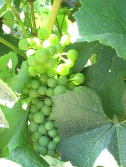 wine-country_9009885235_o
