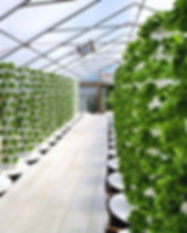 aeroponics-technology-soilless-gardening