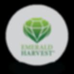 emeraldlogo.png