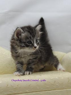 Chaynikoty Smooth Criminal